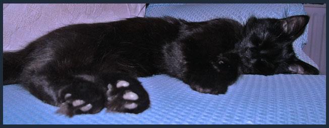 A black kitten sleeping